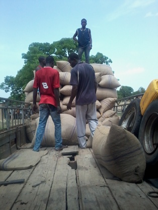 Unloading the baobab seeds for distribution