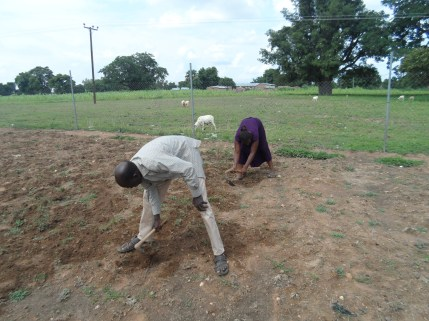 Trax field officers Soloman and Zulehatu get stuck in preparing the land for sowing