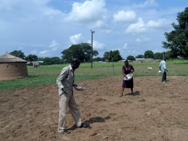 Trax field officers broadcast stylosanthes seeds