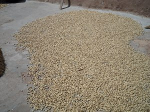Part of Ayamaa's groundnut harvest