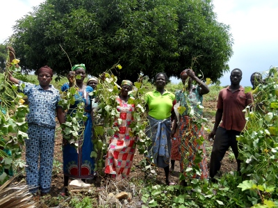 A farmer group gathers for vine multiplication of orange-fleshed sweet potato