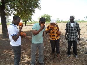 Trax Ghana staff having a raw taste of Borassus fruit