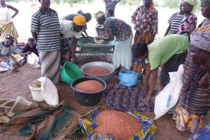 Sharing of 600kg pay-back groundnut seed loan among 24 new women recipients for 2015 cultivation