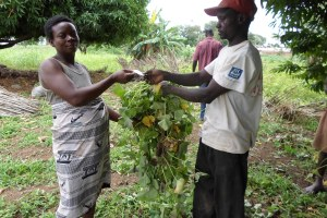 A pregnant woman picking her planting materials (vines) with vouchers from multiplier