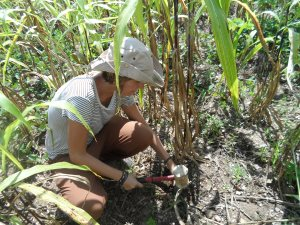 Sarah taking soil samples on crop fields of respondents
